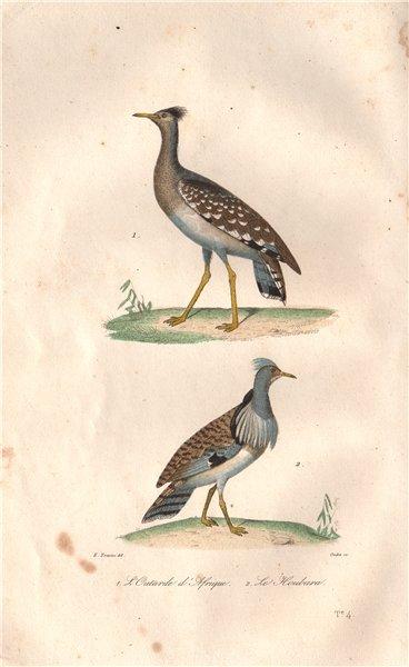 Associate Product BUSTARDS. Outarde (Bustard) d'Afrique; Houbara (Houbara Bustard). BUFFON 1837