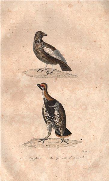 Associate Product GAMEBIRDS. Lagopède (Ptarmigan); Gelinotte du Canada (Spruce Grouse) BUFFON 1837