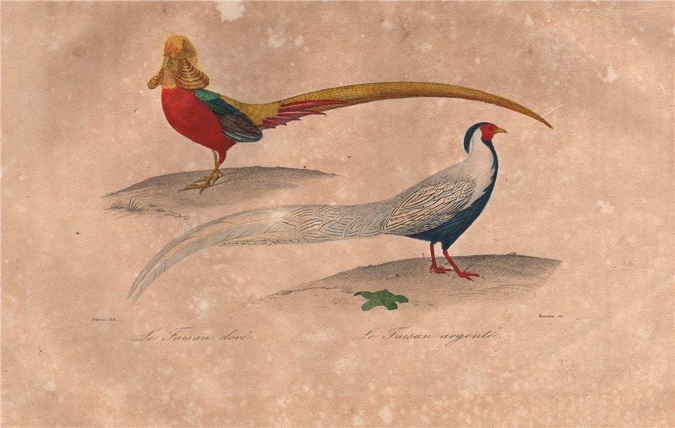 Associate Product GAMEBIRDS. Faisan Doré & Argenté (Golden & Silver Pheasants). BUFFON 1837