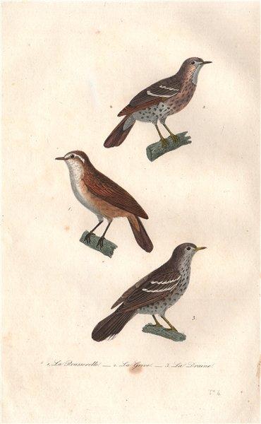 Associate Product BIRDS. Rousserolle (Warbler); Grive (Thrush); Draine (Mistle Thrush) BUFFON 1837