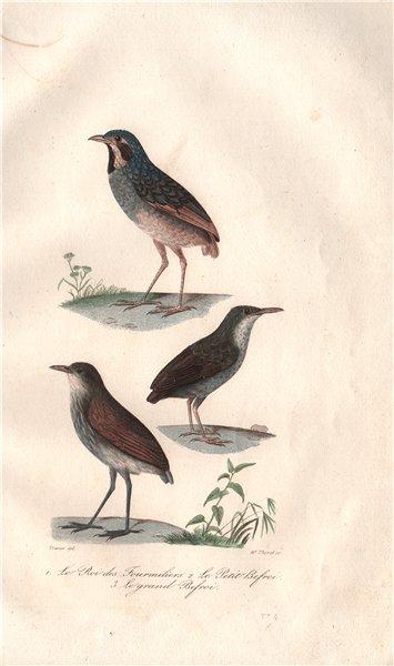 Associate Product BIRDS. Roi des Fourmiliers (Wryneck); Beffroi (Thrush-like Antpitta) BUFFON 1837