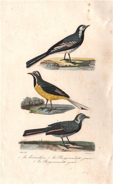 Associate Product WAGTAILS. Lavandière; Bergeronnette jaune/grise.Pied & Grey Wagtails BUFFON 1837
