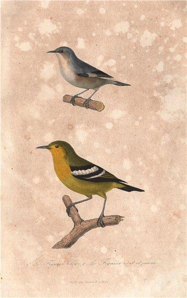 FLYCATCHERS. Blue & Yellow bellied Flycatchers; Reed Warbler. BUFFON 1837