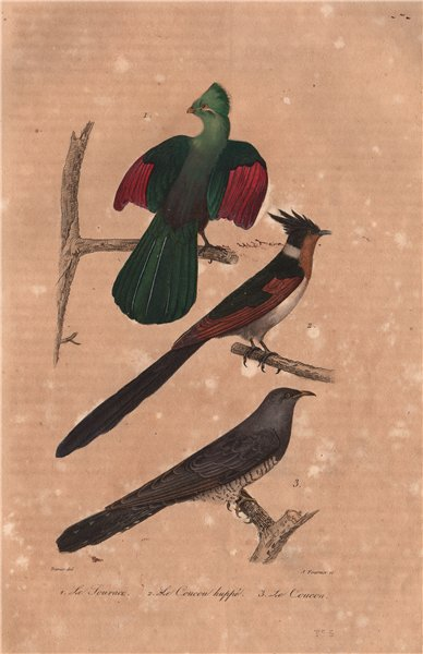 Associate Product BIRDS. Guinea Touraco; Coucou Huppé (Jacobin & Common Cuckoo). BUFFON 1837