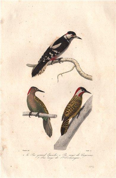 Associate Product WOODPECKERS. Great Spotted, Checkered & Hispaniolan Woodpeckers. BUFFON 1837