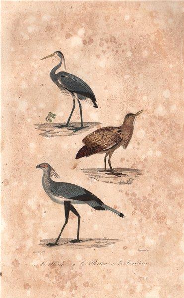 Associate Product BIRDS. Héron (Heron); Butor (Bittern); Secrétaire (Secretary Bird). BUFFON 1837