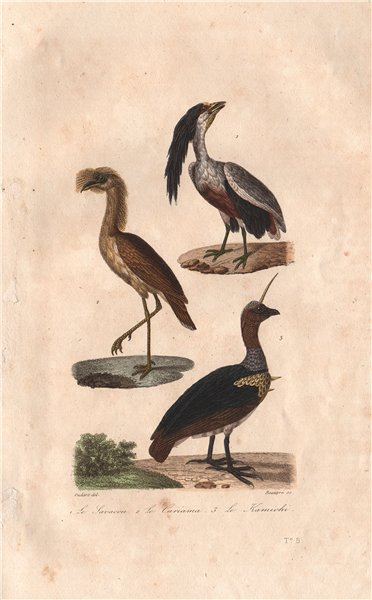 Associate Product BIRDS. Boat-billed Heron; Seriema; Southern Screamer.Kamichi Savacou.BUFFON 1837