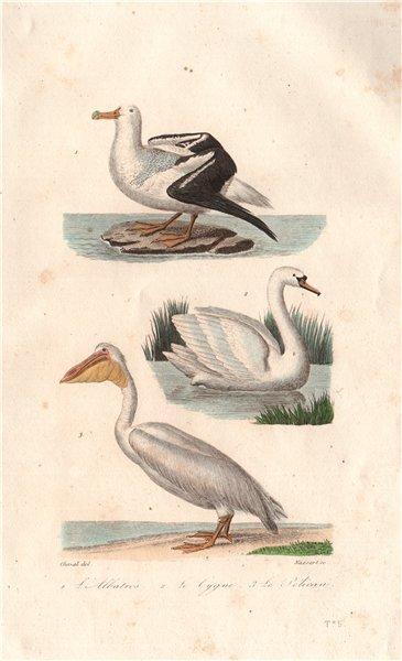 Associate Product BIRDS. Albatros (Albatross); Cygne (Swan); Pélican (Pelican). BUFFON 1837