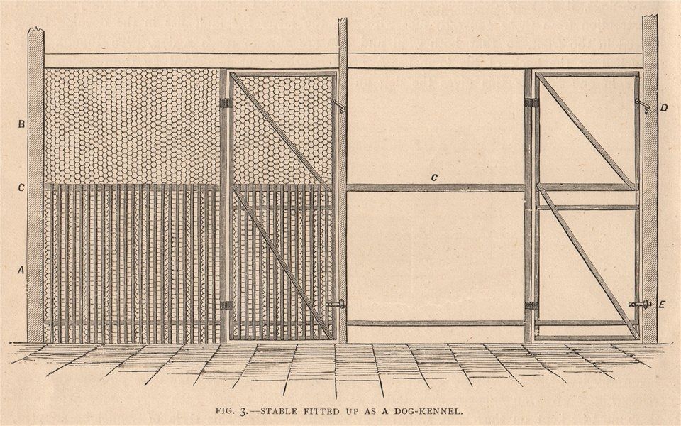 Associate Product DOGS. Stable fitted up as a dog-kennel 1881 old antique vintage print picture
