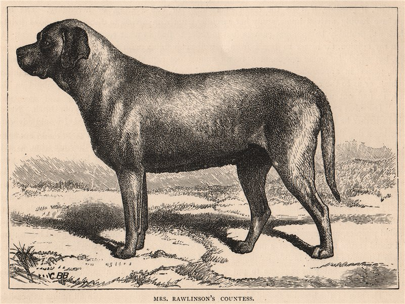 """Associate Product DOGS. Mrs. Rawlinson's """"Countess"""" 1881 old antique vintage print picture"""