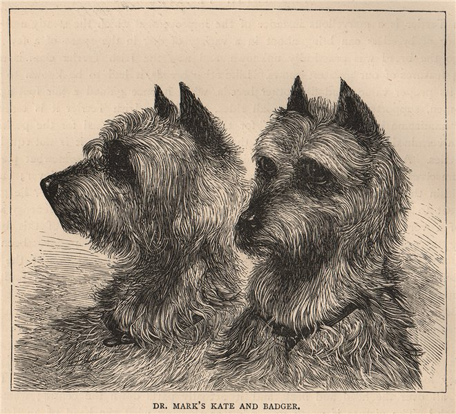 Associate Product DOGS. Dr. Mark's Kate and Badger 1881 old antique vintage print picture