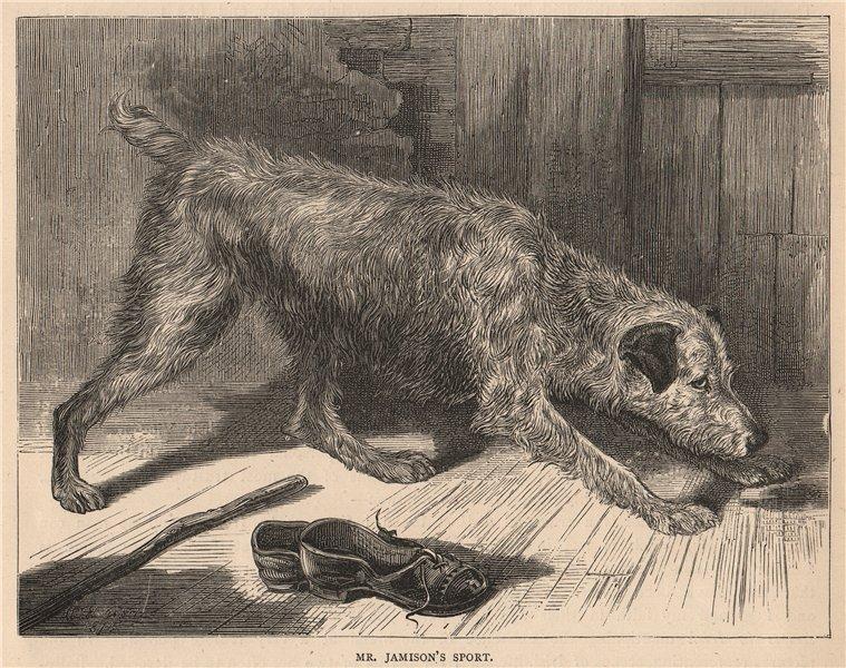 Associate Product DOGS. Mr. Jamison's Sport 1881 old antique vintage print picture