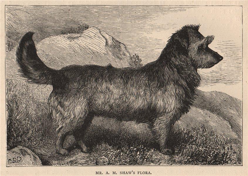 Associate Product DOGS. Mr. A.M. Shaw's Flora 1881 old antique vintage print picture