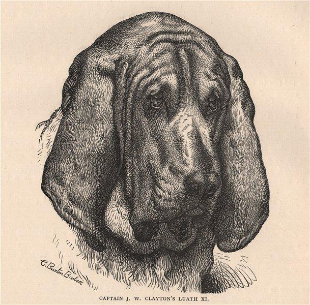 Associate Product DOGS. Captain J.W. Clayton's Luath XI 1881 old antique vintage print picture