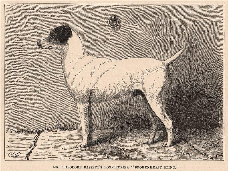 """Associate Product DOGS. Mr. Theodore Bassett's Fox-Terrier """"Brokenhurst Sting"""" 1881 old print"""