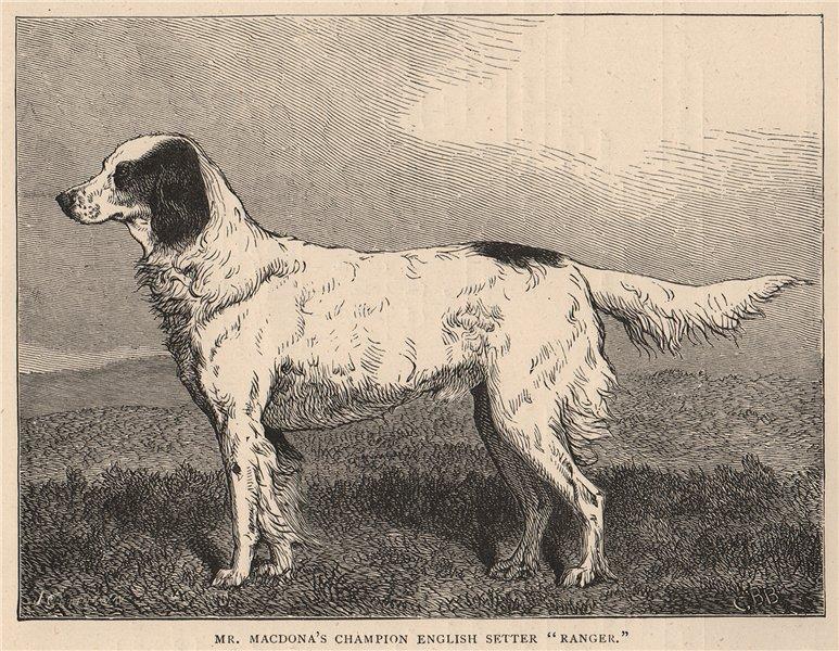 "Associate Product DOGS. Mr. Macdona's Champion English Setter ""Ranger"" 1881 old antique print"