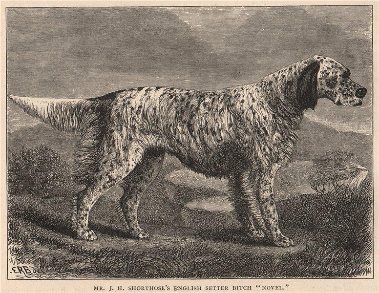 "Associate Product DOGS. Mr. J.H. Shorthose's English Setter Bitch ""Novel"" 1881 old antique print"