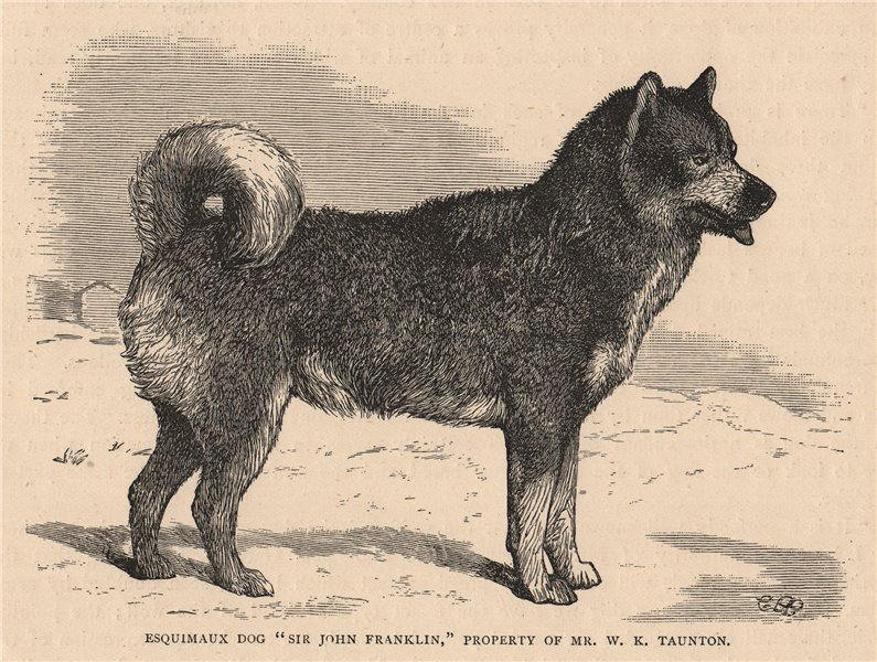 """Associate Product DOGS. Esquimaux Dog """"Sir John Franklin"""" 1881 old antique vintage print picture"""