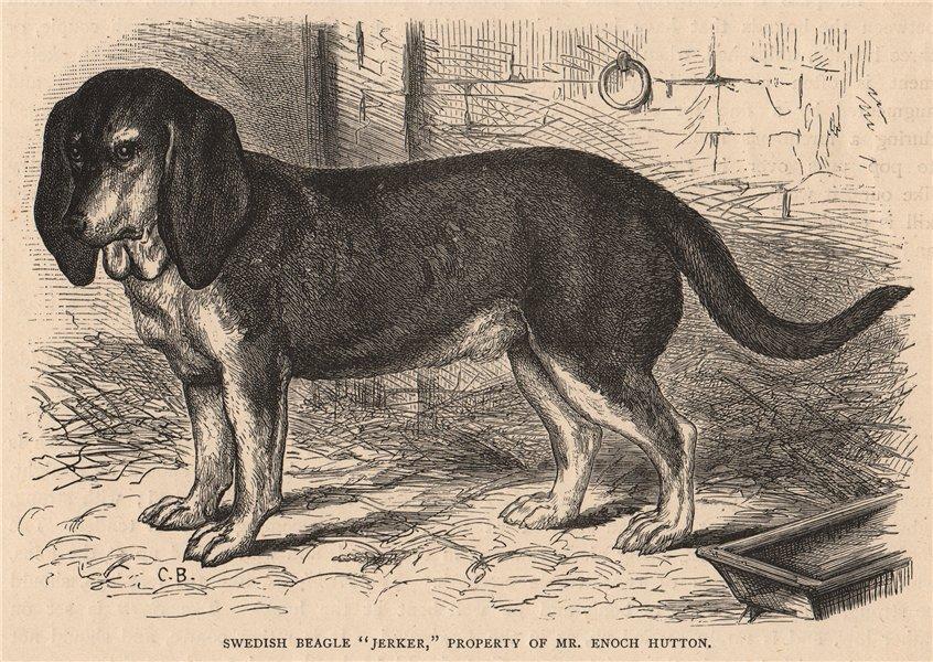 "Associate Product DOGS. Swedish Beagle ""Jerker"" 1881 old antique vintage print picture"