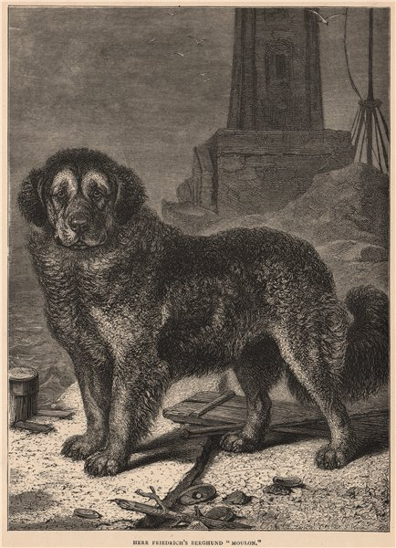 """Associate Product DOGS. Herr Friedrich's Berghund """"Moulon"""" 1881 old antique print picture"""