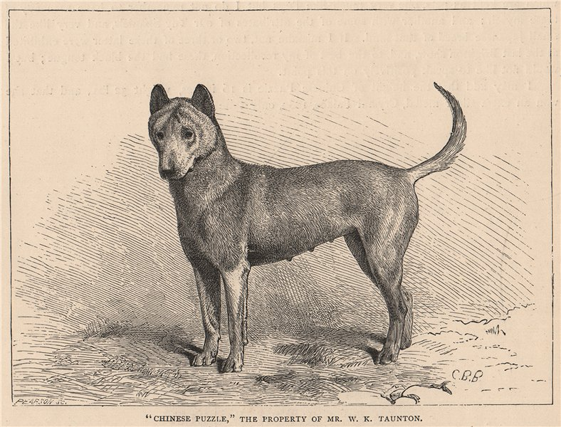 """Associate Product DOGS. """"Chinese Puzzle"""" 1881 old antique vintage print picture"""