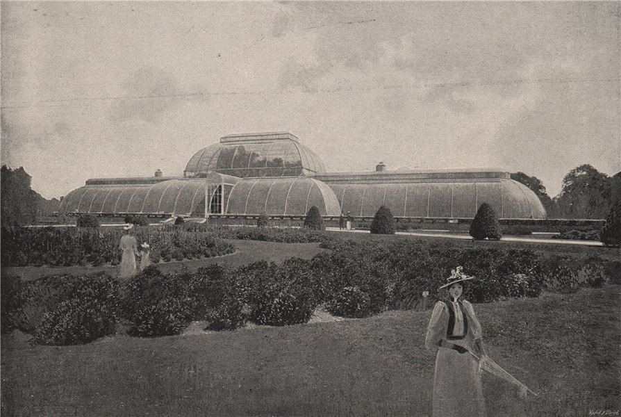 The Palm House, Kew Gardens. London 1896 old antique vintage print picture