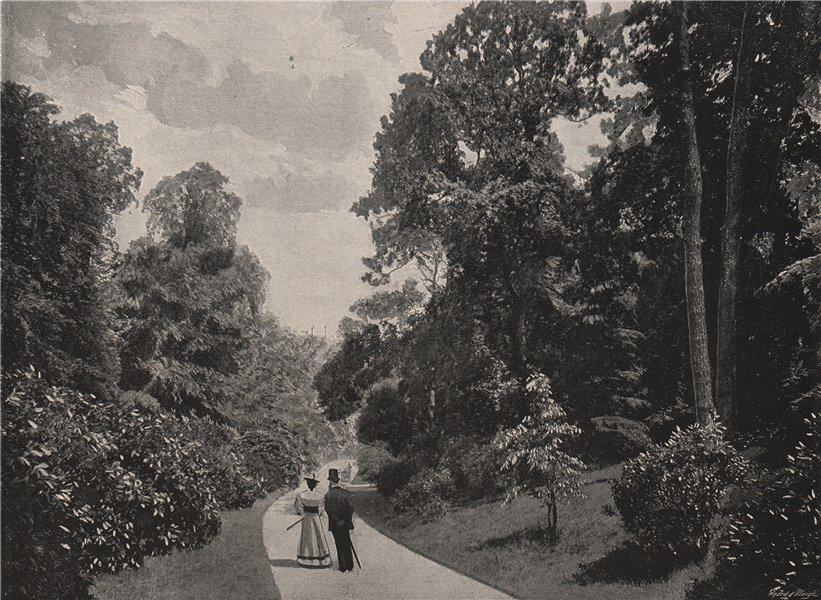 Associate Product The Rhododendron walk, Kew Gardens. London. Parks 1896 old antique print
