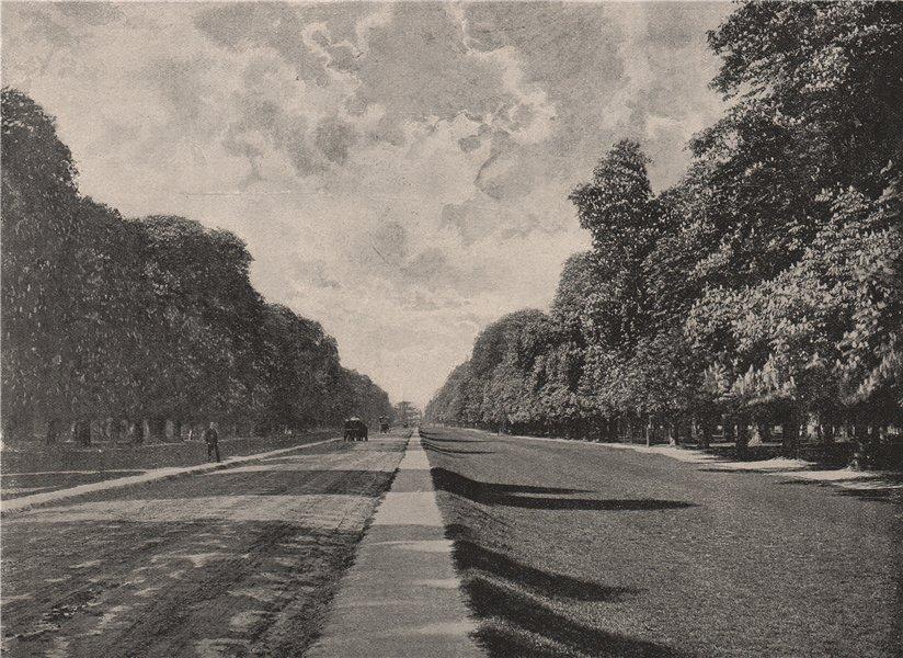 Associate Product Chestnut Avenue, Bushy Park. London 1896 old antique vintage print picture