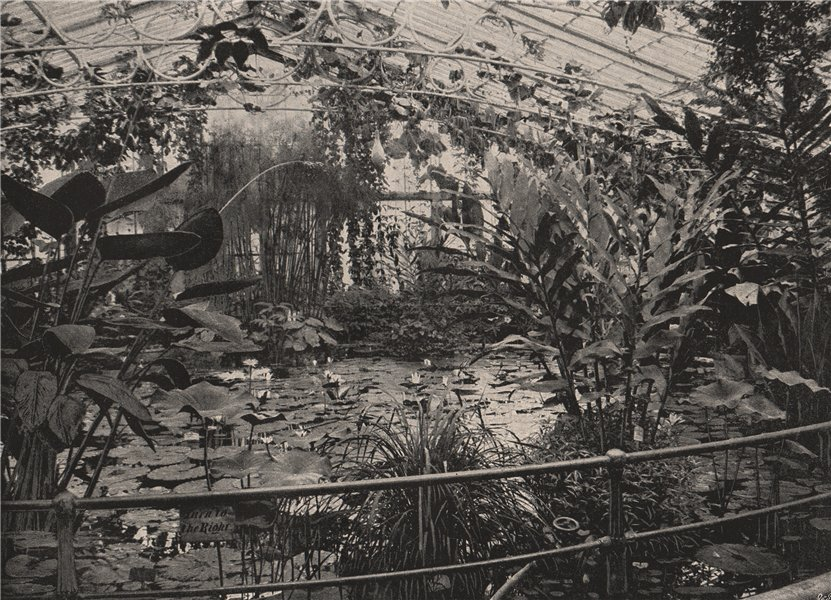 Associate Product Water-Lily House, Kew Gardens. London 1896 old antique vintage print picture