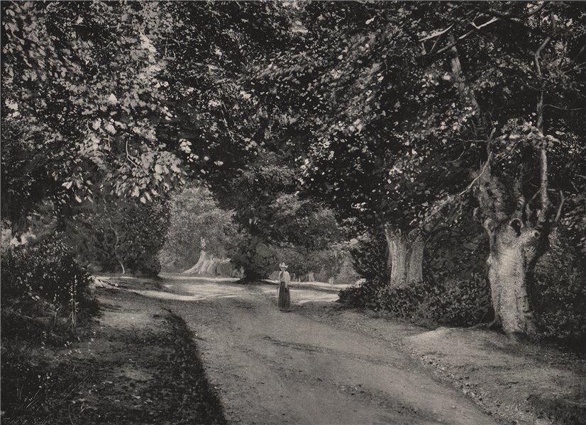 Associate Product Burnham Beeches. Buckinghamshire. Landscapes 1896 old antique print picture