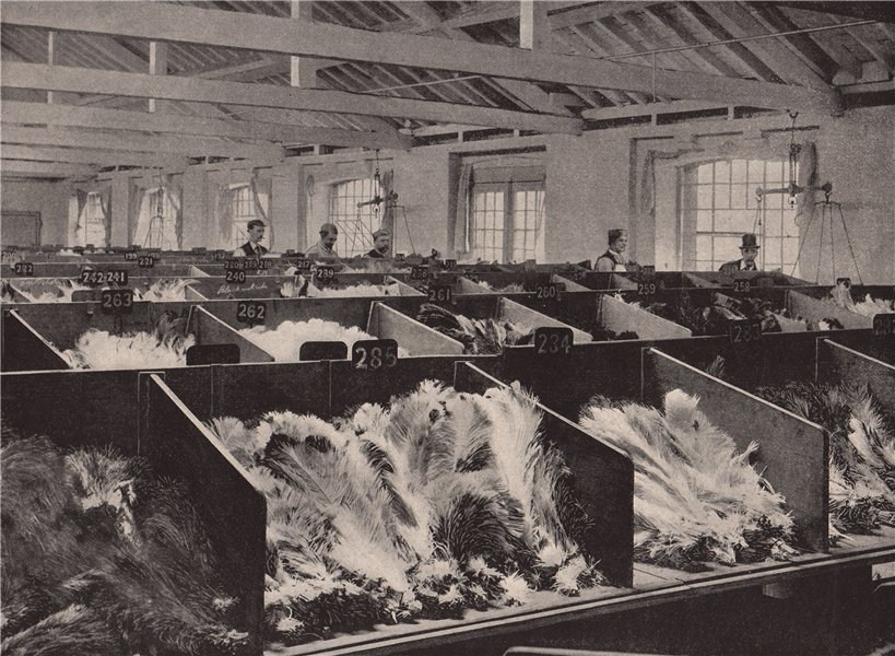 Associate Product Ostrich Feathers at the Cutler Street Warehouses. London. Industry 1896 print