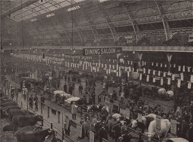 Associate Product The Cattle Show, 1895. London 1896 old antique vintage print picture