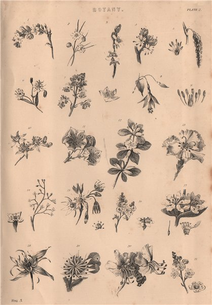 Associate Product Botany. Types of flower II 1880 old antique vintage print picture