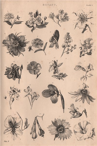Associate Product Botany. Types of flower III 1880 old antique vintage print picture