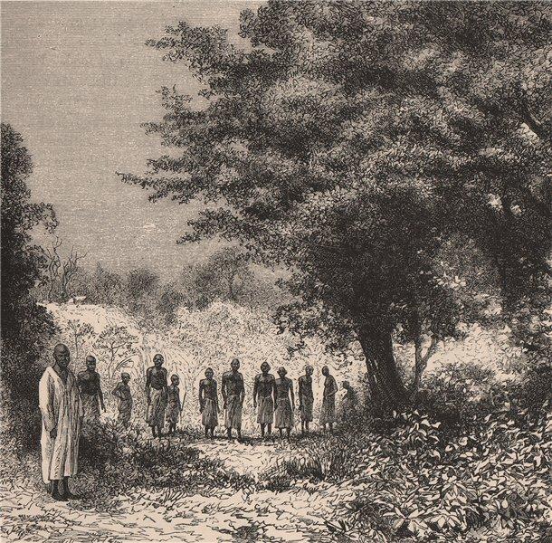 Associate Product Landscape in Lugenda/Lujenda. Mozambique 1885 old antique print picture