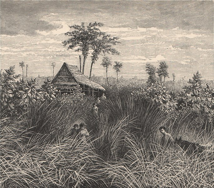 Associate Product Sumatran jungle - View in the state of Deli. Indonesia. East Indies 1885 print