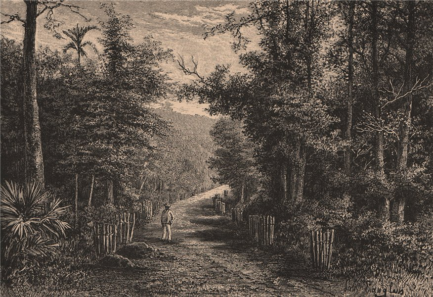 Associate Product Palembang - View near the Keraton, Sacred Grove. Sumatra, Indonesia 1885 print