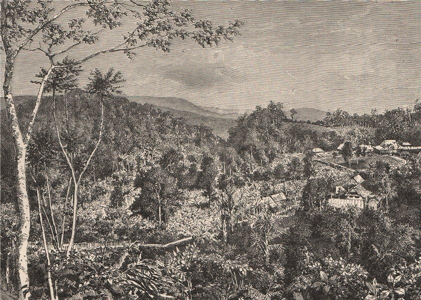 Associate Product Coffee Plantation, Preang Regencies, Java. Indonesia. East Indies 1885 print