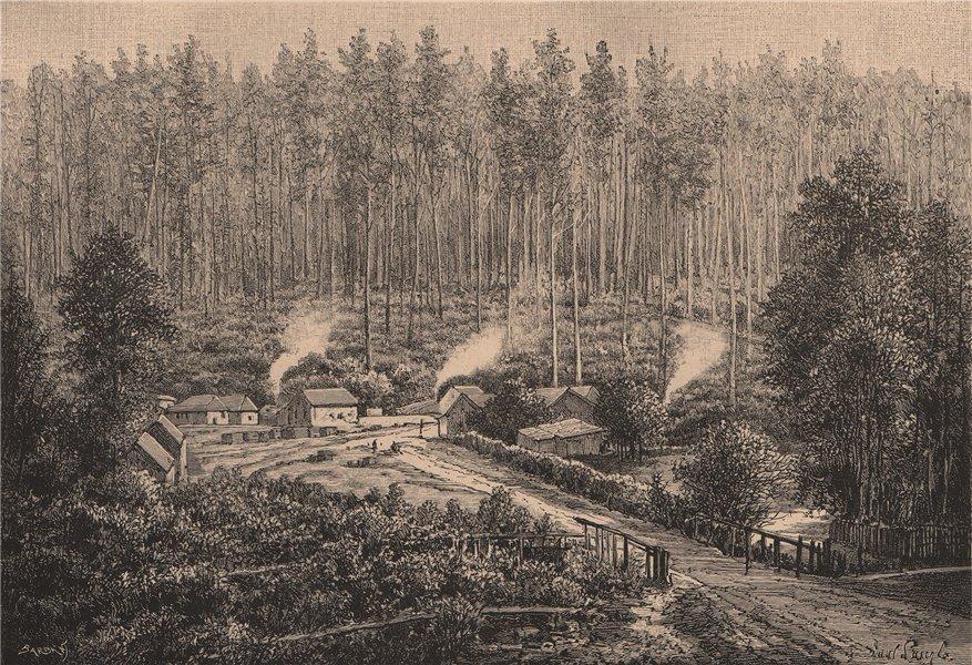 Associate Product Victoria scenery - forest near Fernshawe, NE of Melbourne. Australia 1885