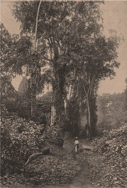 Associate Product Honduras Scenery. Central America 1885 old antique vintage print picture