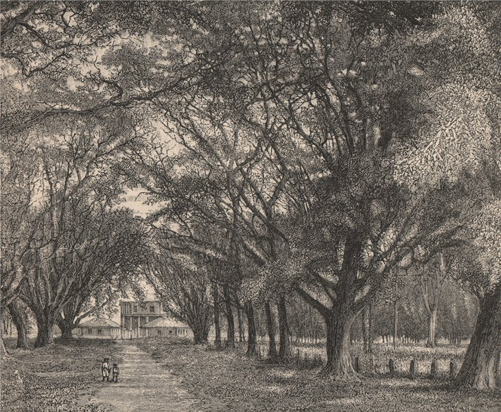 Associate Product View taken at Saint James, Port of Spain, Trinidad. Trinidad and Tobago 1885