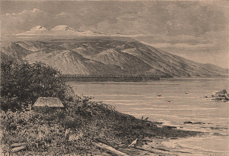 Associate Product Sierra Nevada de Santa Marta - East view at Punta Tapias. Colombia 1885 print