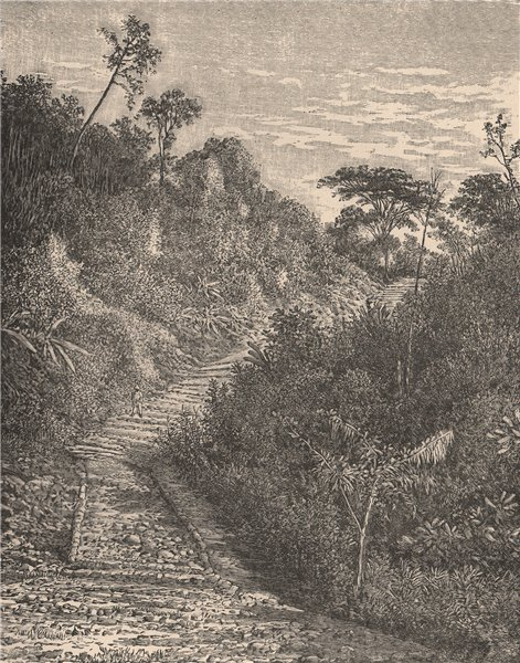 Associate Product Road in the hot lands, Colombia 1885 old antique vintage print picture