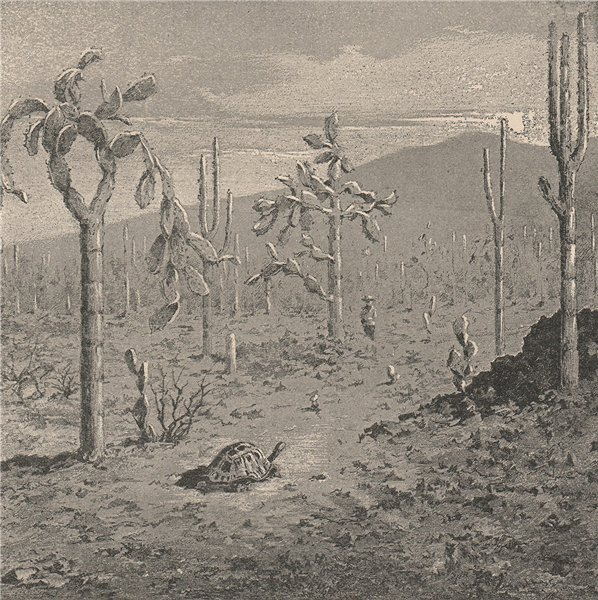 Associate Product Indefatigable (Santa Cruz) Island, Galapagos Islands. Ecuador 1885 old print