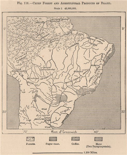 Associate Product Chief forest and Agricultural products of Brazil 1885 old antique map chart
