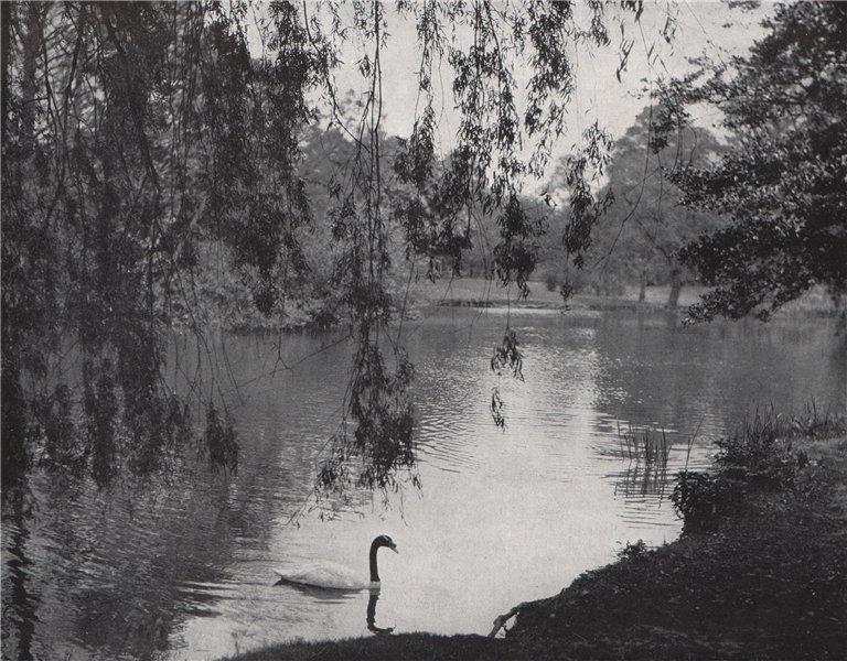 Associate Product The Lake, Kew Gardens. E.O. HOPPÉ. London 1930 old vintage print picture