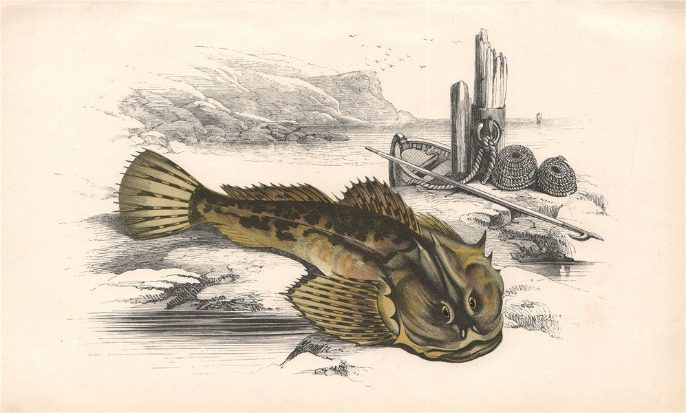 Associate Product FATHER-LASHER Myoxocephalus scorpius short-spined sea scorpion COUCH Fish 1862