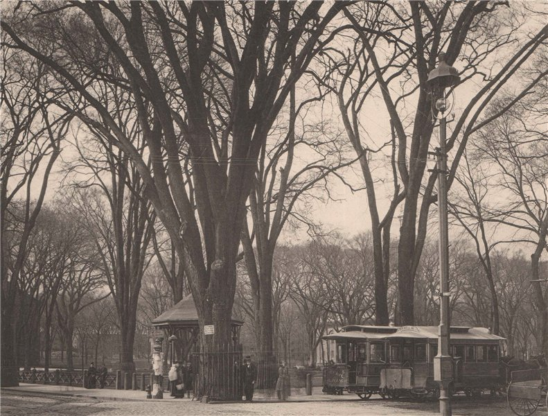 Associate Product The Old Elm on the Green, New Haven, Connecticut. Albertype print 1893