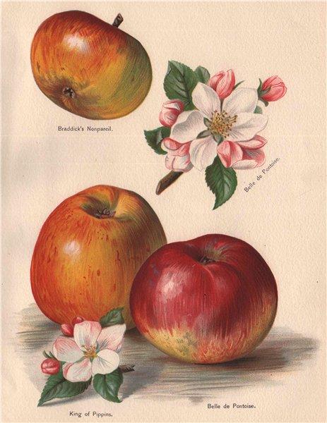 Associate Product APPLES. Braddick's Nonpareil; Belle de Pontoise; King of Pippins. WRIGHT 1892