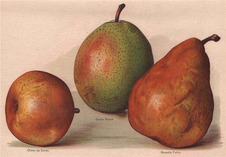 Associate Product PEARS. Olivier de Serres; Easter Beurré; Nouvelle Fulvie. WRIGHT 1892 print